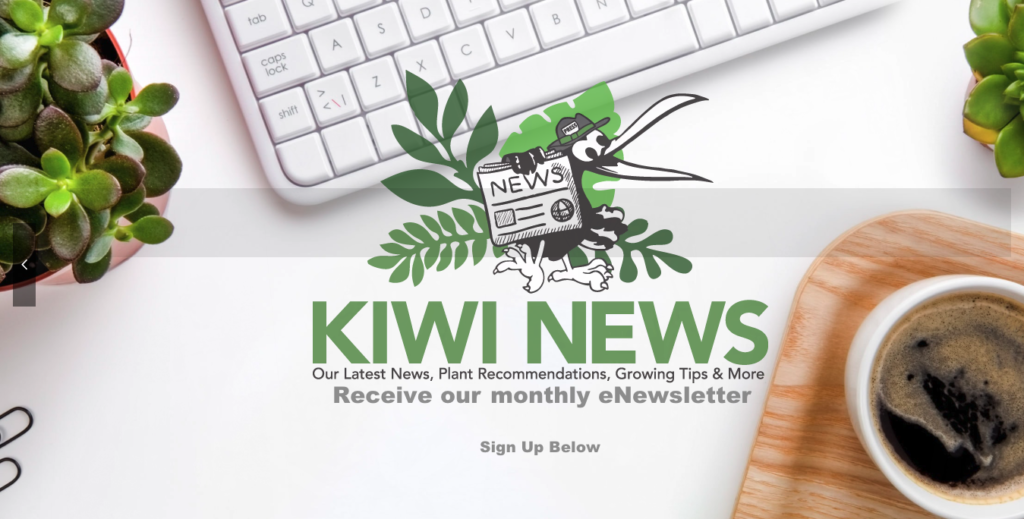Kiwi Nurseries - KIWI NEWS